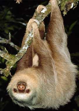 In inglese, per 'bradipo' e 'accidia', si usa 'sloth'...