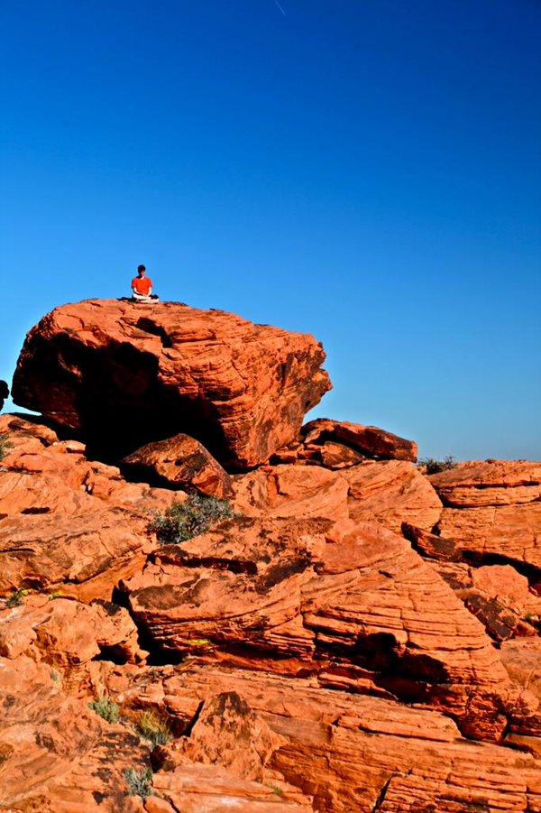 meditazione e contatto con la natura: luckychewy cerca questo